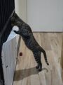 Cats of Neco Republic, #0571