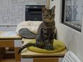 Cats of Neco Republic, #0572