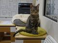 Cats of Neco Republic, #0573