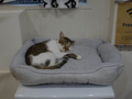 Cats of Neco Republic, #0576
