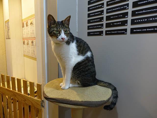 Cats of Neco Republic, #0581