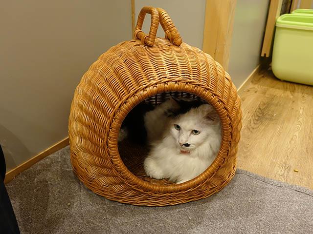 Cats of Neco Republic, #0582