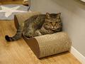 Cats of Neco Republic, #0583