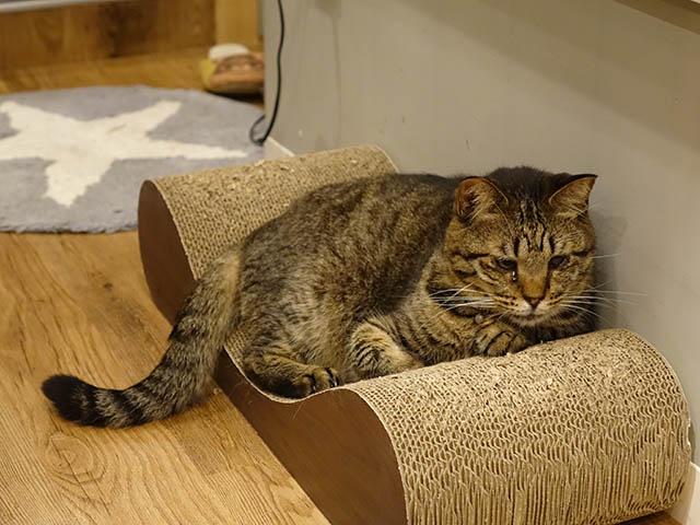 Cats of Neco Republic, #0584