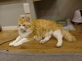 Cats of Neco Republic, #0585