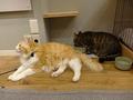 Cats of Neco Republic, #0586