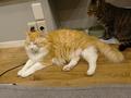 Cats of Neco Republic, #0591