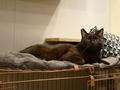 Cats of Neco Republic, #0593