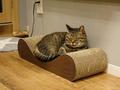 Cats of Neco Republic, #0595