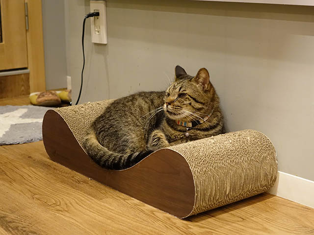 Cats of Neco Republic, #0596