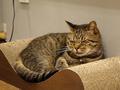 Cats of Neco Republic, #0597