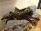 Cats of Neco Republic, #0600