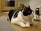 Cats of Neco Republic, #0601