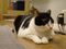 Cats of Neco Republic, #0602