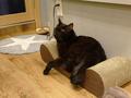 Cats of Neco Republic, #0603