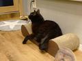 Cats of Neco Republic, #0604