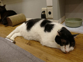 Cats of Neco Republic, #0605