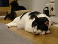 Cats of Neco Republic, #0606