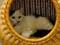 Cats of Neco Republic, #0607