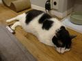 Cats of Neco Republic, #0608