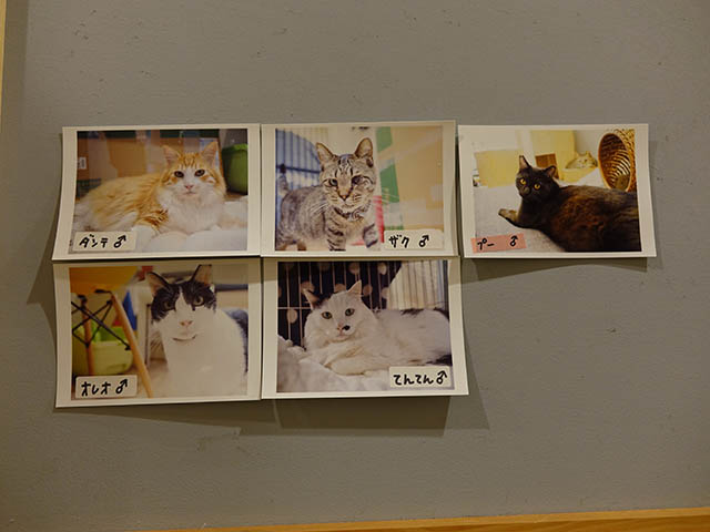 Cats of Neco Republic, #0609