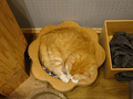 Cats of Neco Republic, #0610