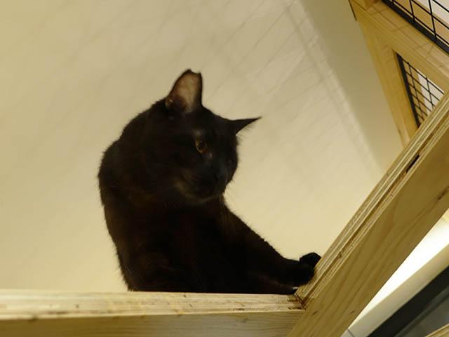 Cats of Neco Republic, #0612