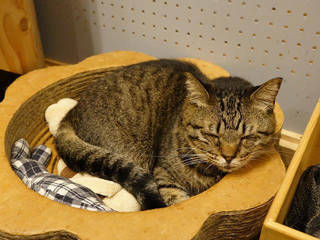 Cats of Neco Republic, #0617