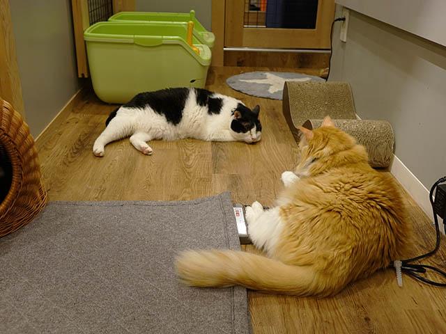 Cats of Neco Republic, #0619