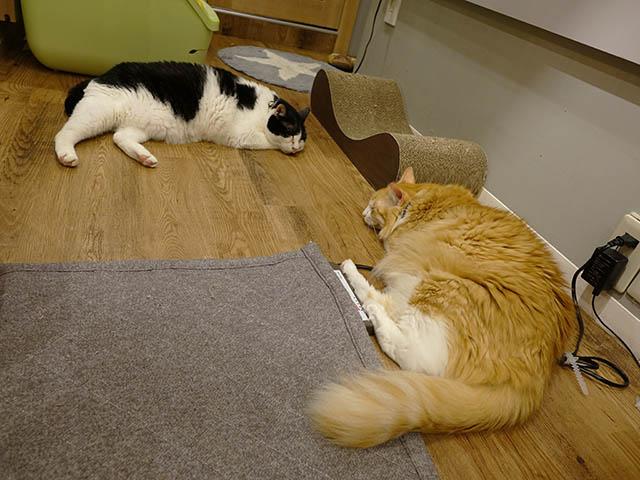 Cats of Neco Republic, #0625