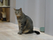 Cats of Neco Republic, #0626