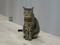Cats of Neco Republic, #0627