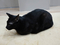 Cats of Neco Republic, #0628