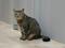 Cats of Neco Republic, #0629