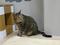 Cats of Neco Republic, #0632