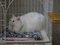Cats of Neco Republic, #0633