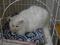Cats of Neco Republic, #0634