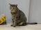 Cats of Neco Republic, #0635