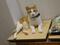 Cats of Neco Republic, #0651