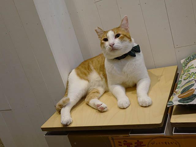 Cats of Neco Republic, #0654