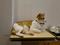 Cats of Neco Republic, #0657