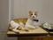 Cats of Neco Republic, #0658