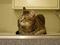 Cats of Neco Republic, #0659
