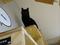 Cats of Neco Republic, #0660