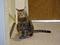 Cats of Neco Republic, #0673