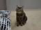 Cats of Neco Republic, #0694