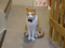 Cats of Neco Republic, #0696