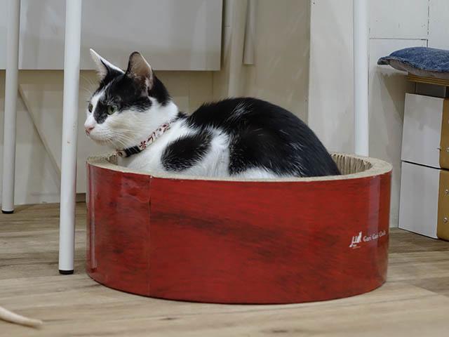 Cats of Neco Republic, #0700