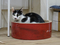 Cats of Neco Republic, #0701