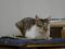 Cats of Neco Republic, #0702